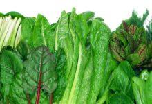 أنواع و فوائد الخضروات الورقية