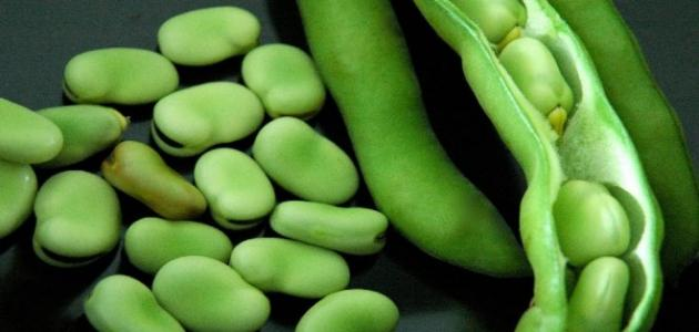 إليك أهم فوائد الفول الأخضر التي تعود على الجسم