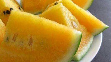 فوائد البطيخ الأصفر