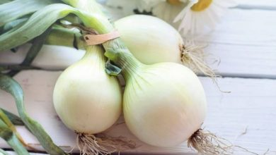 فوائد البصل الأبيض