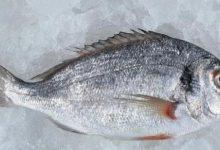 فوائد سمك الدنيس