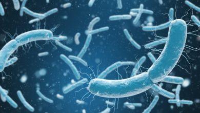 فوائد البكتيريا النافعة