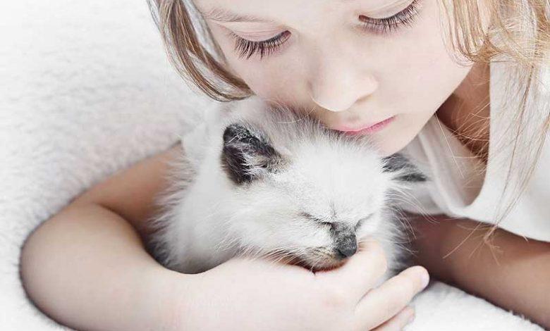 تعرف على الأمراض التي تسببها القطط للإنسان