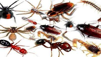 معلومات مدهشة عن الحشرات المنزلية