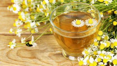 شاي البابونج يطيل العمر ويعالج السرطان
