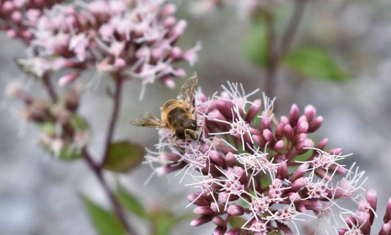 أهم طرق ووسائل الوقائية من تأثير المبيدات على النحل