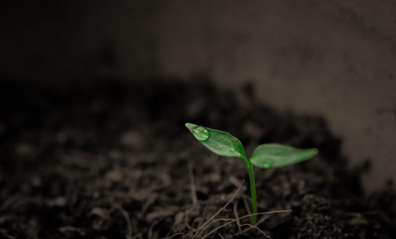 الكمية التي يحتاجها النبات من عناصر سمادية في المحاصيل الحقلية