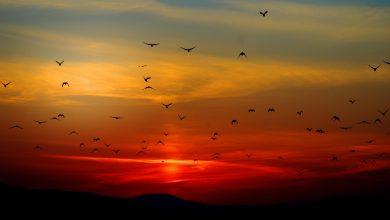شروط الإنتاج الحيواني في عملية صيد الطيور