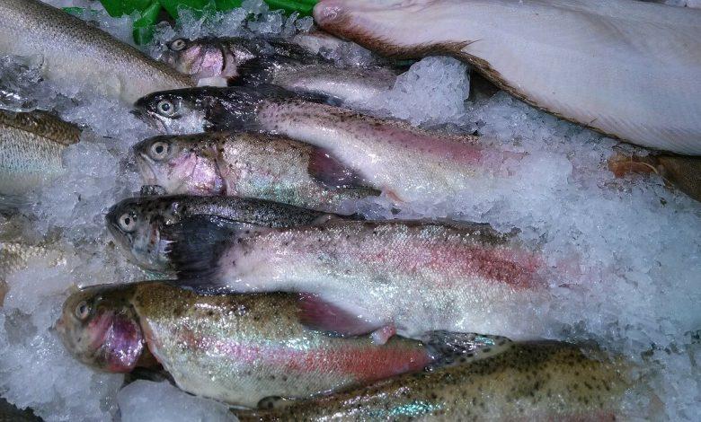 طريقة إزالة تجميد الأسماك المجمدة في التصنيع الغذائي