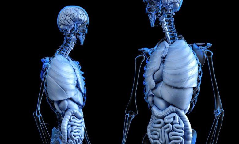 علاقة العقد القاعدية بالحركة ووضعية الجسم والقدرات الادراكية