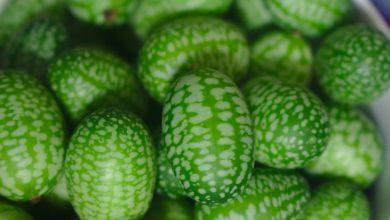 فاكهة الكوكاميلون – Melothria scabra