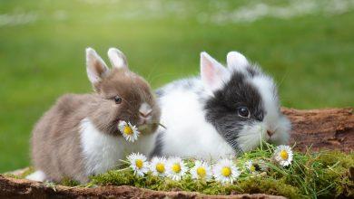 قصة الأرنب والأصدقاء