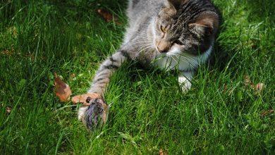 قصة في شراكة القطة والفأر – Cat and Mouse in Partnership