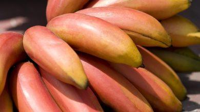ما هو الموز الأحمر؟