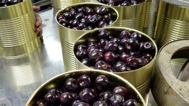معايير صناعة الأغذية في المصانع