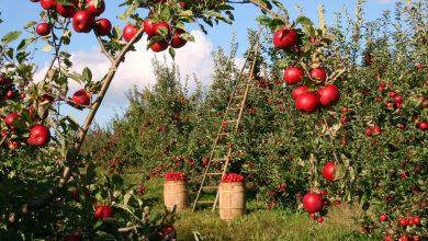 10 أنواع مختلفة من الفاكهة الحمراء