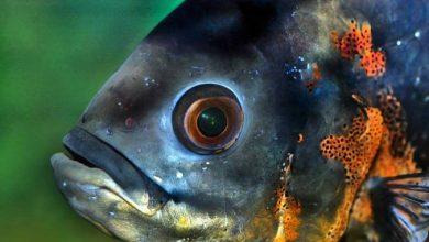 هل السمك يرى الماء