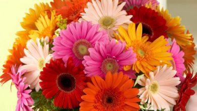 اجمل انواع الورد البلدي واسمائهم