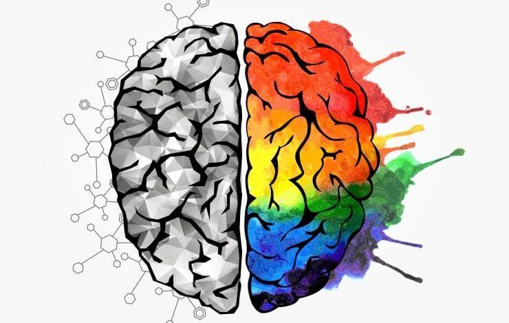 الفرق بين الدماغ الايمن والايسر