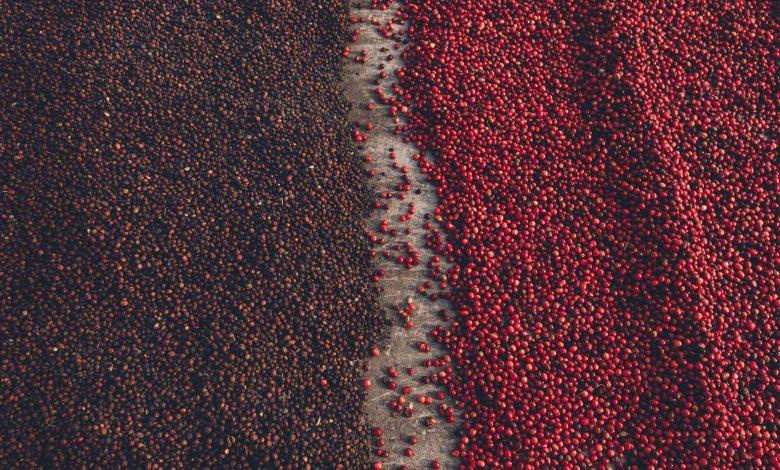 الفرق بين القهوة المغسولة والمجففة
