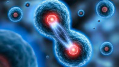 هل الانقسام الخلوي يسبب نمو المخلوقات عديدة الخلايا