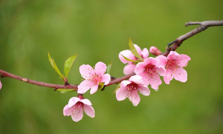 ازهار بعض النباتات تكون ملونة وذات رائحة عطرة