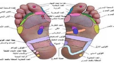 اصابع القدم وعلاقتها باعضاء الجسم