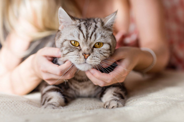 الأمراض التي تنقلها القطط للإنسان