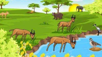 ما الذي يحدد السعة التحملية للنظام البيئي؟