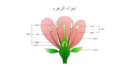 ما جزء النبات الذي ينتج البذور