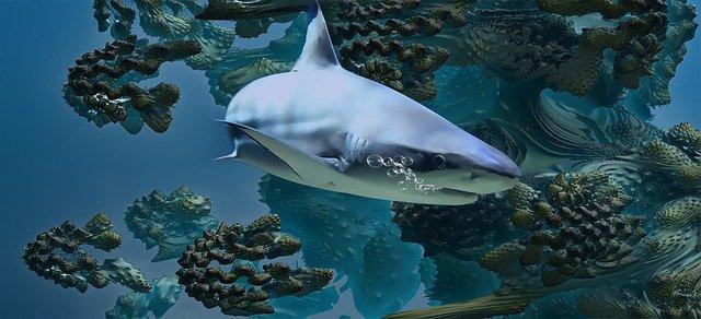 ما هي الأسماك الغضروفية